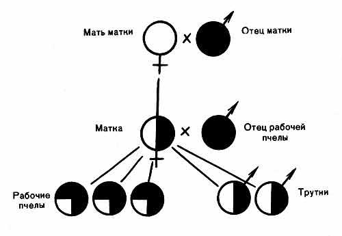 Redox Genome Interactions