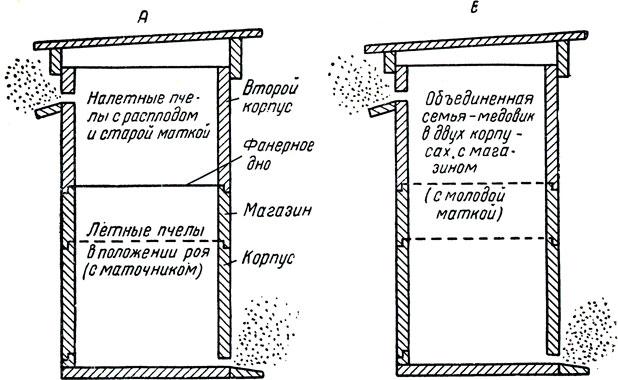 Схема временного деления семьи